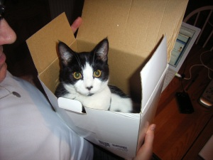 Benny has unusual musical tastes, he is a big fan of 80s band Living In A Box
