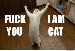fuck-you-i-am-cat