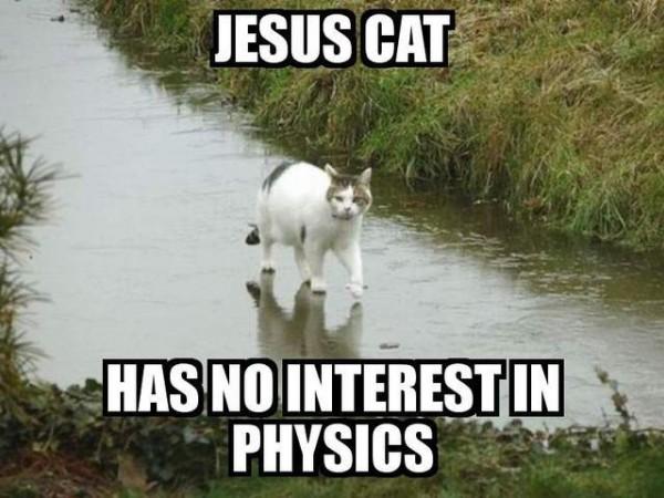jesus-cat-600x450