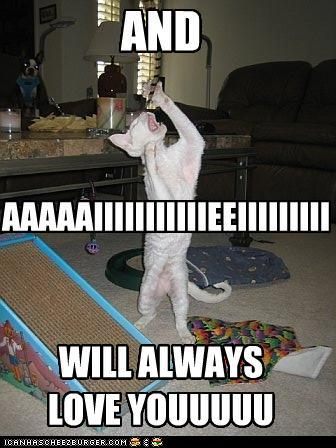 funny-pictures-whitney-houston-cat