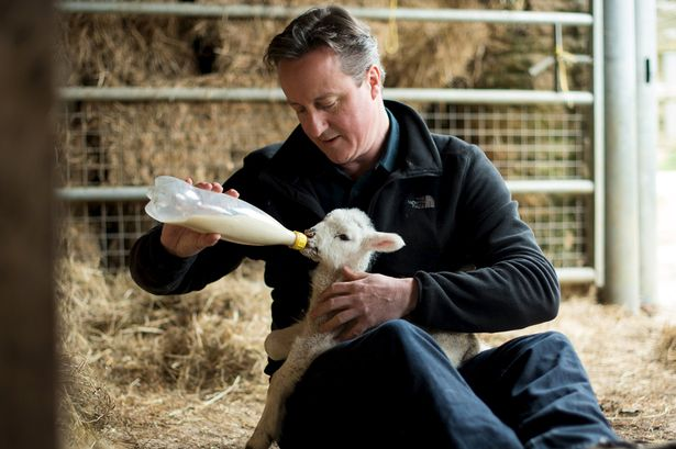 Well if you won't let us posh arseholes hunt and kill foxes we'll bloody well hunt vicious lambs instead!