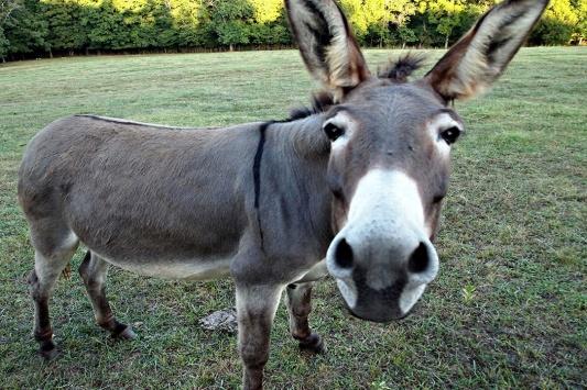 donkey1050x700